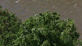 Die Bäume im starken Wind stock video
