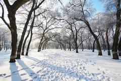 Die Bäume mit Raureif und Abdrücken Lizenzfreie Stockbilder