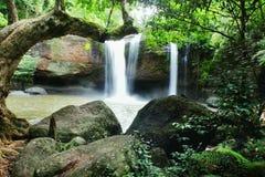 Die Bäume u. der Wasserfall Lizenzfreie Stockbilder