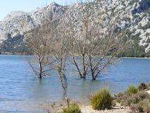 Die Bäume und das Wasser Lizenzfreie Stockfotografie