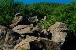 Die Bäume und die Steine in den Bergen Stockfotos
