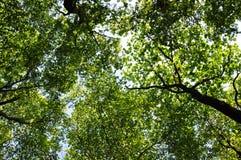 Grüner Wald mit Sonnenlicht Lizenzfreie Stockfotografie