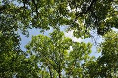 Grüner Wald mit Sonnenlicht Lizenzfreie Stockbilder