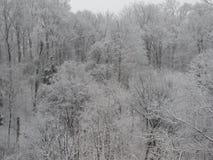 Die Bäume, die von den Blättern unfruchtbar sind, nehmen einen Mantel des Schnees an lizenzfreies stockfoto