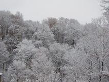 Die Bäume, die von den Blättern unfruchtbar sind, nehmen einen Mantel des Schnees an stockfotografie