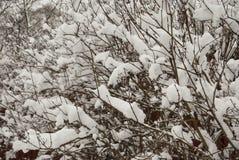 Die Büsche im Garten werden mit frischem weißem Schnee bedeckt Afte Lizenzfreies Stockbild