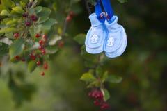 Die Babyschuhe des Babys, die am Baum mit Beeren hängen Lizenzfreie Stockfotografie