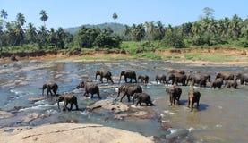Die badenden Elefanten stockbild
