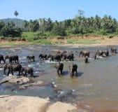 Die badenden Elefanten lizenzfreie stockbilder