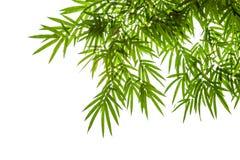 Die Bambusblätter, die auf weißem Hintergrund lokalisiert werden, Beschneidungspfad schließen ein Stockfotos