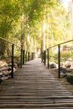 Die Bambusbrücke durch Natur im Wald Stockfotografie