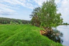 Die Bank des Flusses Mologa Stockbild