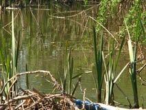 Die Bank von Fluss mit Stöcken und Wurzeln stockfotos