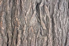 Die Barke des alten Baums als Hintergrund Stockbilder