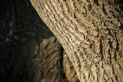 Die Barke des Baums Stockfoto