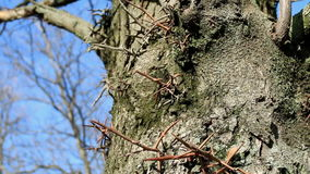 Die Barke des Baums mit grünem Moos stock video footage