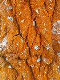 Die Barke des Baums mit orange Moos und Pilz stockfoto