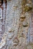Die Barke eines alten Baums Stockfotos