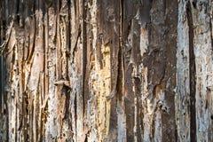 Die Barke eines Baums in der Bedeckung brennt Lizenzfreie Stockbilder
