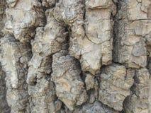 Die Barke von Bäumen Stockfoto
