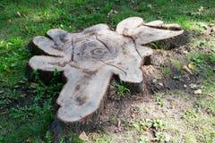 Die Basis eines alten Baums Lizenzfreies Stockbild