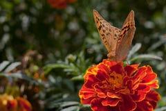 Die Basisrecheneinheit auf einer Blume Stockfotografie