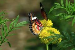 Die Basisrecheneinheit auf einer Blume stockfoto