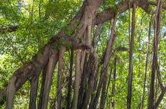 Die Baum Wurzel Lizenzfreies Stockbild