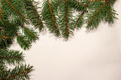 Die Baumaste Stockbilder