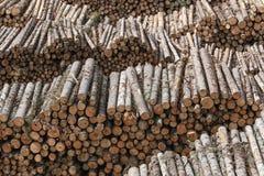 Die Baumreihen Lizenzfreies Stockfoto