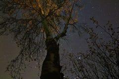 Die Baumspitze in der Nacht mit Sternen Lizenzfreie Stockbilder