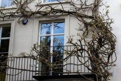 Die Baumwicklung entlang der Wand um das Fenster und Balkon im zweiten Stock stockfoto