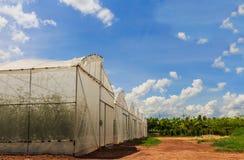 Die Bearbeitung von Melonensämlings-Plastikgewächshäusern Lizenzfreies Stockfoto
