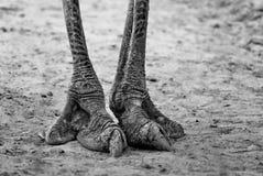 Die Beine Lizenzfreie Stockfotos