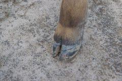 Die Beine einer Kuh, die aus den Grund steht Stockfotos