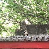 Die Beobachter auf dem Dach stockfoto