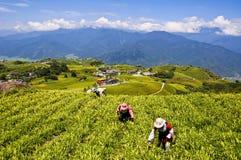 Die Bergbaulilien Taiwans Liushidanshan Lizenzfreies Stockbild