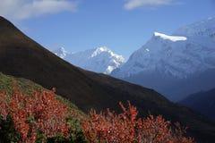 Die Berge in Annapurana-Stromkreis Lizenzfreie Stockfotos