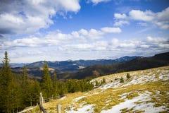 Die Berge und der Wald Stockbilder