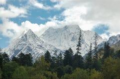 Die Berge versteckt hinter dem Wald Stockbild