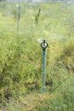Die Berieselungsanlage, welche die Anlagen wässert Lizenzfreies Stockbild
