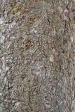 Die Beschaffenheit der Barke eines alten Baums Lizenzfreies Stockbild