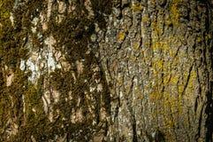 Die Beschaffenheit der Barke eines alten Baums stockfotografie