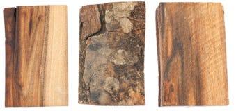 Die Beschaffenheit der Barke und des Holzes der Walnuss Lizenzfreies Stockfoto