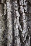 Die Beschaffenheit der Baumrinde Stockfotos
