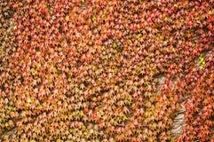 Die Beschaffenheit der Blätter der Anlagen, die auf wachsen Lizenzfreie Stockbilder