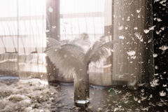 Die Beschaffenheit der Federn eines Schwans lizenzfreies stockfoto