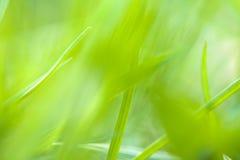 Die Beschaffenheit der grünen Unschärfe und weich für Hintergrund Stockfotografie