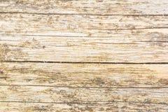 Die Beschaffenheit des alten Naturholzes, der Klotz der Pappel wird durch große Sprünge, hat eine ungleichmäßige Farbe geschädigt Lizenzfreies Stockbild