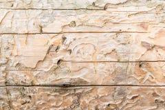 Die Beschaffenheit des alten Naturholzes, der trockene gezierte Klotz wird durch kleine Sprünge, hat eine ungleichmäßige Farbe ge Lizenzfreie Stockfotos